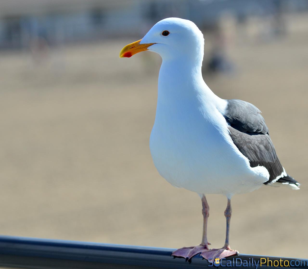 Seagull Beach Club
