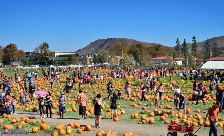 Pumpkin Festival Southern California